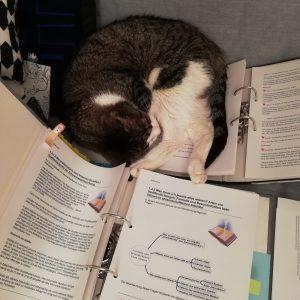 Semester 5 - Katzenunterstützung